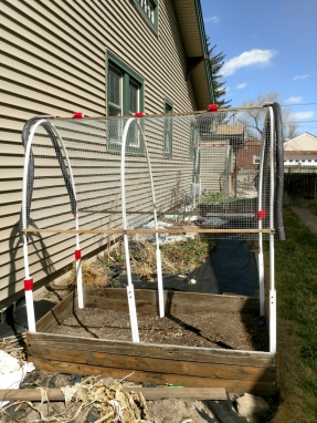 I call this my Covered Wagon garden box. The wire screen protects against our summer hail storms